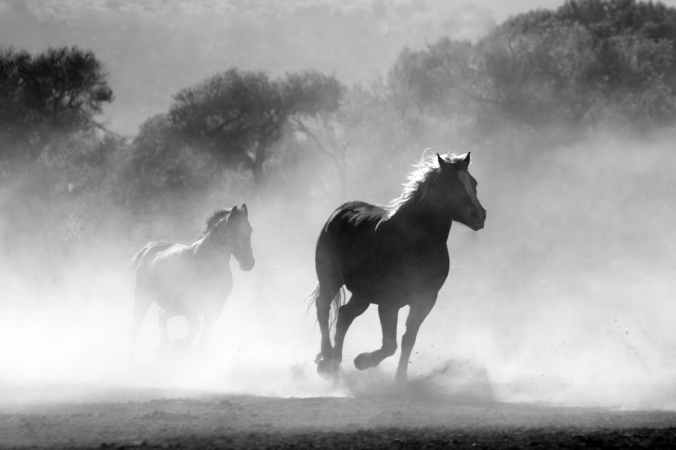 nature animal fog freedom