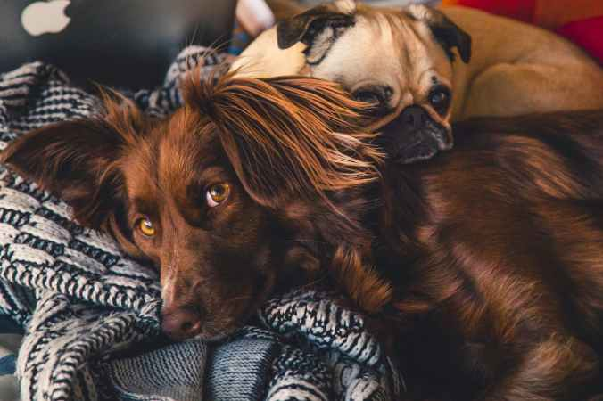 adorable animals breed canine