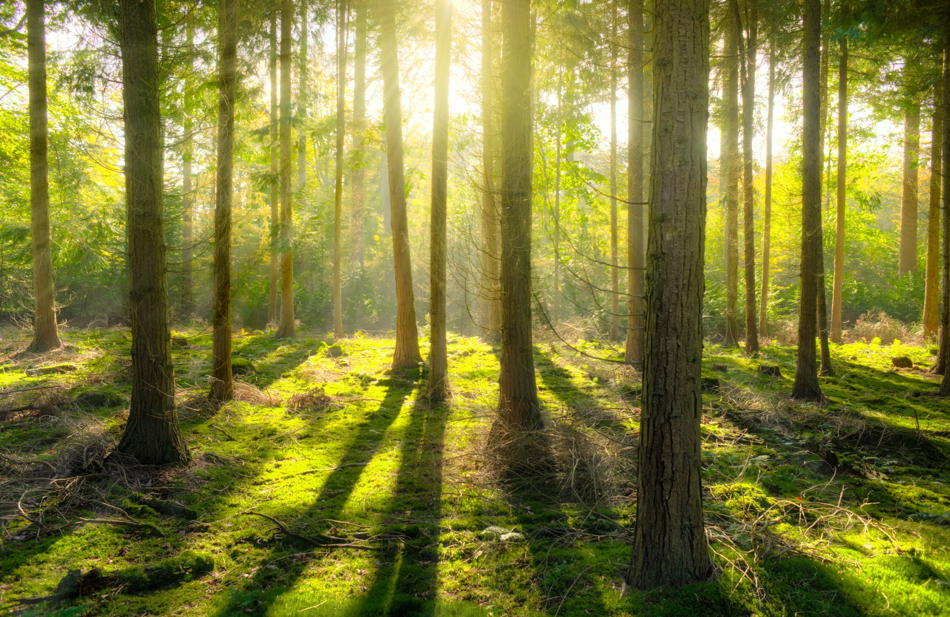 bright daylight environment forest